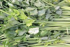 Free Celery Stock Image - 17923451