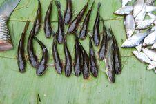 Free Fresh Fish Stock Photography - 17923842