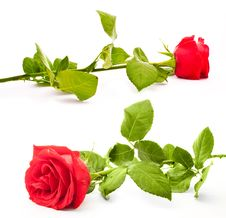 Free Red Rose Royalty Free Stock Images - 17923959