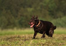 Free Black Dog Royalty Free Stock Photos - 17924298