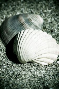 Free Vintage Shells On The Sand Stock Photography - 17927292