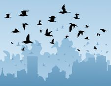 Free Birds Over A City Stock Photography - 17929952