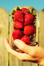 Free Strawberry In Glass In Hand Royalty Free Stock Images - 17935379