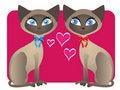 Free Two Siamese Cat Valentines Stock Photo - 17935560