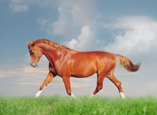 Free Chestnut Horse Free Stock Images - 17932124