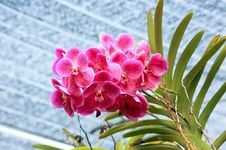 Free Red Orchid Stock Photography - 17935032
