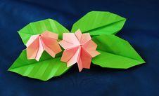 Free Paper Sakura Royalty Free Stock Image - 17935486
