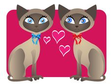 Free Two Siamese Cat Valentines Stock Photo - 17935560