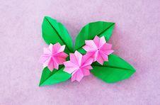 Paper Sakura Stock Image