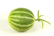 Free Muskmelon Stock Photography - 17935902