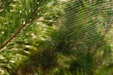 Free Spiderweb Stock Image - 17935921