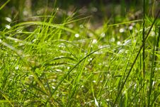 Free Grass In Raindrops Stock Images - 17935944