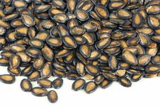 Free Black Melon Seeds Stock Images - 17936154