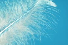 Free The Feather Royalty Free Stock Photos - 17936718