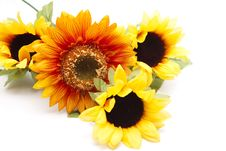 Free Branch With Sunflowers Royalty Free Stock Photos - 17938248