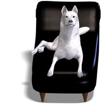 Free White Wolf On The Couch Royalty Free Stock Image - 17938326