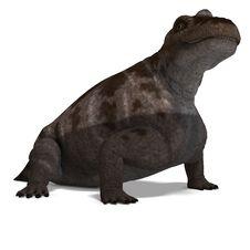 Free Dinosaur Keratocephalus Stock Photo - 17938380