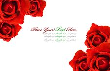Free Red Roses Stock Photography - 17940632
