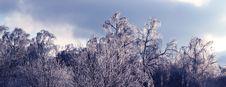 Free Frosty Trees Stock Photos - 17943603