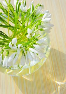 Free Snowdrops In A Vase Stock Photography - 17944582