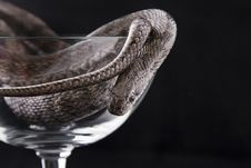Free The Snake Lies In A Goblet Royalty Free Stock Images - 17944779