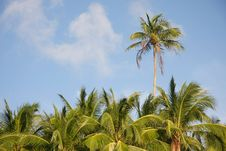 Free Palm Trees On Sky Background Stock Photos - 17945123