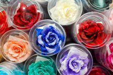 Free Colorful Fake Rose Flower Royalty Free Stock Photography - 17945467