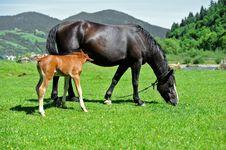 Free Horse Stock Image - 17945931