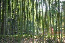 Free Bamboo Seethrough In A Japanese Garden(MusèeKhan) Stock Photos - 17947883