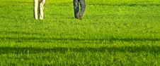 Free Grass-field Stock Photography - 17949682