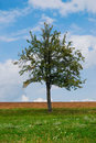 Free Bright Tree With Green Grass And Blue Sky Stock Image - 17954171
