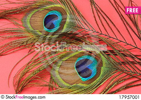 Free Peacock Feathers Stock Image - 17957001