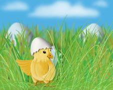 Free Easter Little Yellow Chick In The Grass Royalty Free Stock Images - 17952289