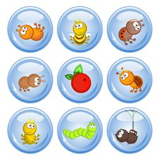 Free Buttons Insect Royalty Free Stock Photo - 17953665