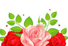 Roses Illustration Royalty Free Stock Photo