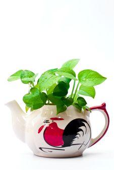 Free White Teapot. Stock Images - 17955494