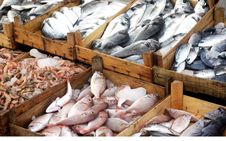 Free Fresh Fishes Royalty Free Stock Photography - 17956787