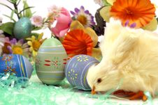 Free Easter Chick Stock Photo - 17957260