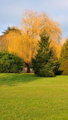 Free Garden Trees Stock Photos - 17958693
