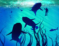 Free Sharks And Diver Royalty Free Stock Image - 17965646