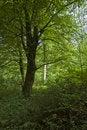 Free Leafy Stock Photos - 17966333