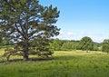 Free Pasture Land Stock Photos - 17966353