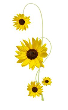 Free Designed Sunflower Royalty Free Stock Photos - 17960038