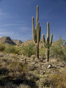 Desert Scene Royalty Free Stock Photography