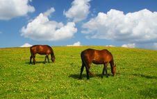 Free Horses Stock Photo - 17960630