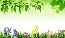 Free Spring Stock Photo - 17962080