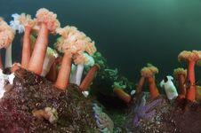 Free Undersea Garden Stock Photos - 17962733