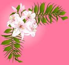 Free Beautiful Lily Design Element Royalty Free Stock Photo - 17963465