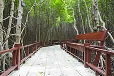 Free Mangrove Forest , Stock Image - 17966211