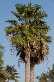 Free Palm Tree Stock Images - 17966934
